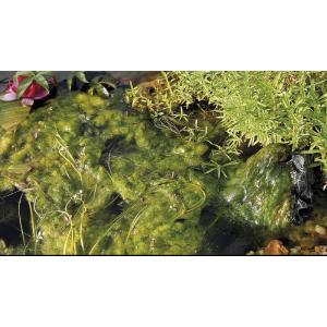 Oase AquaActiv AlGo Universal 500 ml na 10 m3 - proti vláknité řase