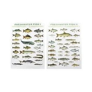 Plakát sladkovodní ryby 1. díl